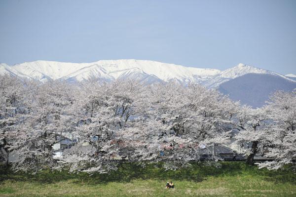 投稿者: shozo (東京都) 撮影日: 2014年4月13日