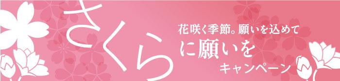 À�さくらに願いを」キャンペーン|桜だより|日比谷花壇